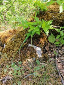 Zádielska tiesňava - jašterica