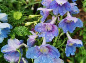 orgován motel modrý kvet
